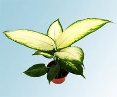 Vivero online for Vivero plantas online
